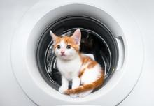 Tiny Kitten Sitting Inside A W...