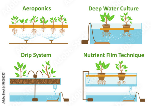 Fototapeta Set of aeroponic and hydroponic plant growth systems.Color vector illustration obraz
