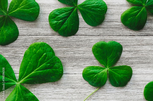 Fotografia, Obraz  Shamrocks on White Table
