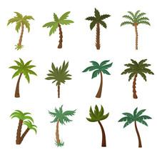 California Palm Trees. Summer Tropical Plant Vector Set