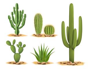 Biljke kaktusa postavljene u pustinji među pijeskom i kamenjem. Realistična vektorska ilustracija izolirana na bijeloj pozadini