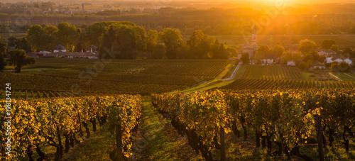 Garden Poster Vineyard Vineyard Sunrise in Bordeaux Vineyard, Gironde