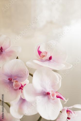 Foto op Plexiglas Magnolia Beautiful lace with flower pattern - macro photo