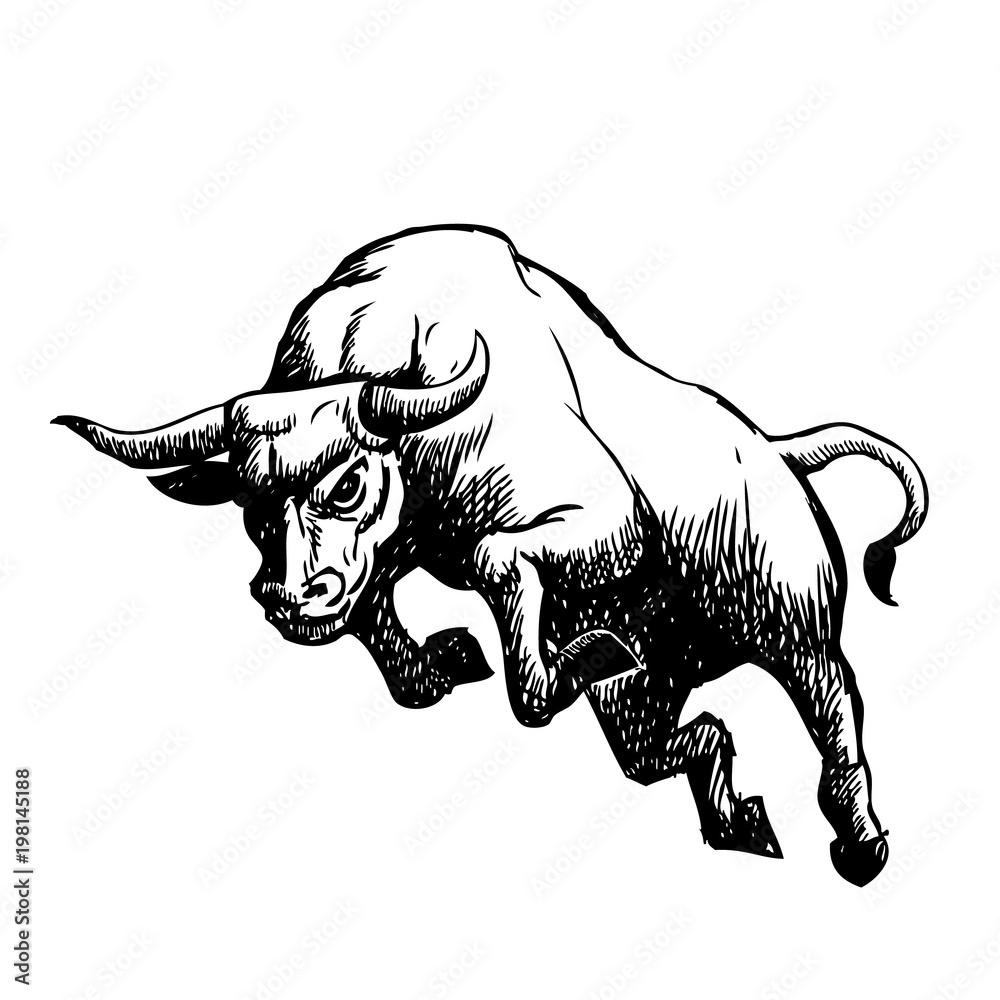 Fototapeta freehand sketch illustration of charging bull