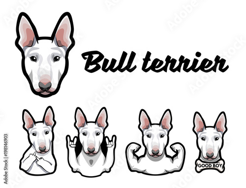 Photo Bull terrier with gestures