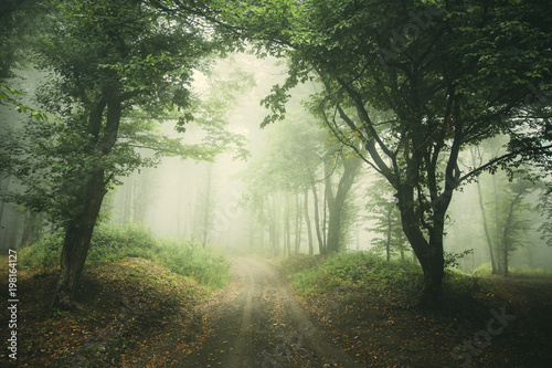Poster Olive misty forest road background