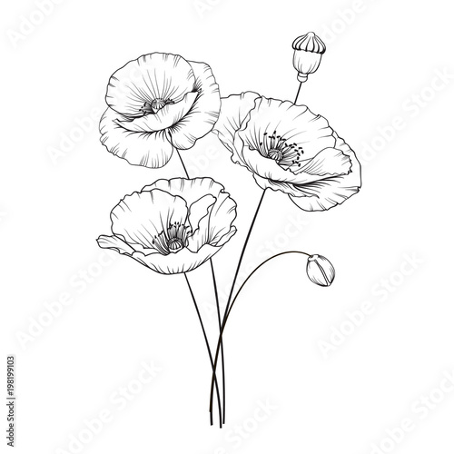 Obraz Vintage poppy illustration. Wedding flowers patern. Image of watercolor detailed hand drawn poppies. Vector illustration. - fototapety do salonu