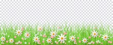 Spring Border With Green Grass And Flowers On Transparent Background - Greeting Card Decoration Element For Easter Congratulation Or Poster. Cartoon Vector Illustration.