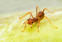Ants Are Protected From Invasi...