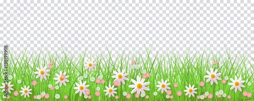 spring border with green grass and flowers on transparent background