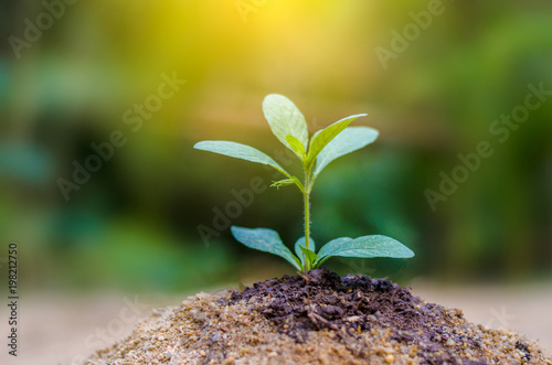 Garden Poster Plant Planting seedlings young plant in the morning light on nature background