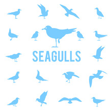Silhouettes Of Gulls.