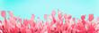 Leinwanddruck Bild - Unusual Pink Cactus Field On Turquoise Background