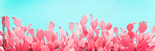 Stampa su Tela  Unusual Pink Cactus Field On Turquoise Background