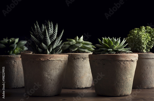 Fotobehang Planten Close-up of potted succulent plants on table against black background