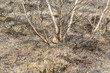 Verbranntes Buschland nach einem Waldbrand