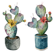 Watercolor Cactus With Flowers In A Pot. Hand Painted Opuntia With Red And Yellow Flowers Isolated On White Background. Illustration For Design, Print, Fabric Or Background.
