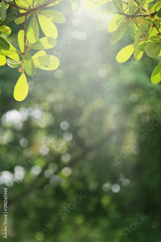 Fotobehang Bomen Green nature spring background.
