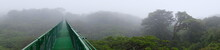 Foggy Rain Forest