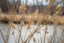 Macro Closeup Of Tall Grass Blowing In Wind
