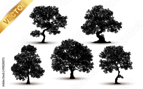 Fotografía Collection tree silhouette isolated on white background.