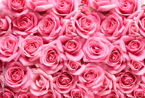 Fotografiet ピンクの薔薇の背景素材