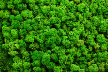 FototapetaGreen moss texture