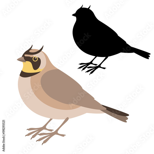 Fotografija horned lark bird vector illustration flat style  silhouette
