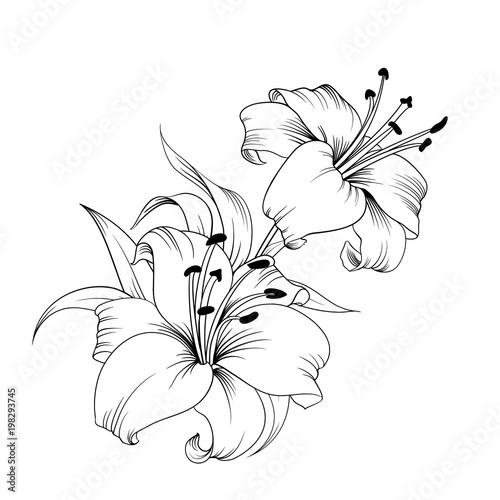 White lily isolated on a white background Billede på lærred