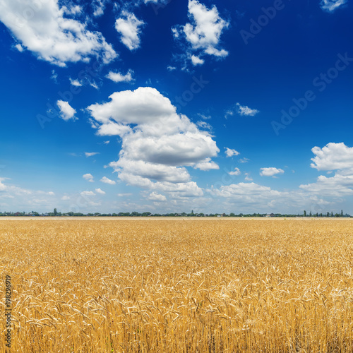 Photo Stands Night blue deep blue sky with clouds over golden agriculture field