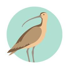 Curlew Bird Vector Illustratio...