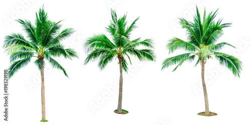 Foto auf Leinwand Palms Set of coconut tree isolated on white background used for advertising decorative architecture. Summer and beach concept. Tropical palm tree.