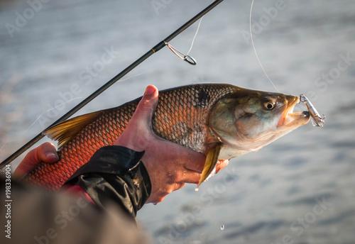 Caught fish Canvas Print