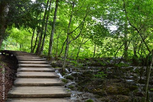 Tuinposter Weg in bos Croatie Plitvice