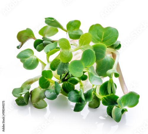 Valokuva  Young sprout microgreen isolated with shadow. Clipping path.