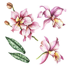 Set Of Orchids. Hand Draw Wate...