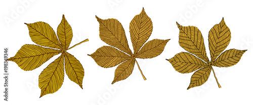 Fototapeta Autumn obraz