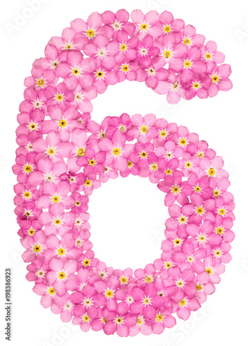 Poster  Arabic numeral 6, six, from pink forget-me-not flowers, isolated on white backgr