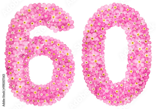 Poster  Arabic numeral 60, sixty, from pink forget-me-not flowers, isolated on white bac