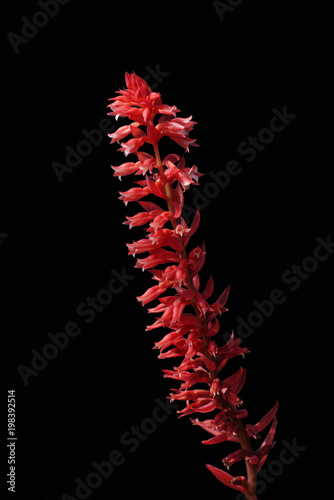 click for Wall Murals price · Low-Key Red Flower