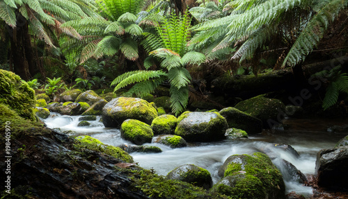 Fényképezés Cascades of a rainforest stream with large overhanging ferns and mossy rocks and logs in the wilderness of Tasmania Australia
