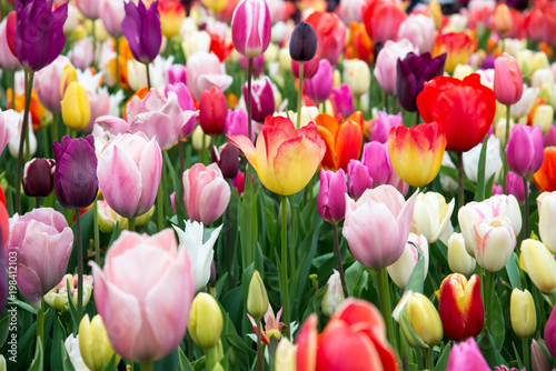 Blooming flowers in park. Netherlands, Europe