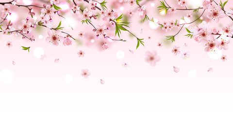 Panel SzklanyBlooming branch chinese cherry background with falling petals, spring vector illustration