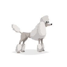 French White Poodle Cartoon Illustration. Comic Dog Character. Pet Animal Isolated On White Background.