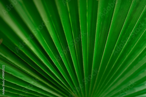 Foto op Plexiglas Textures Macro of green palm leaf with copy space. Sun light effect and sunny bokeh. Summer, holiday and travel concept