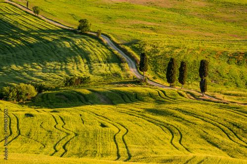 Deurstickers Honing Tuscany spring landscape