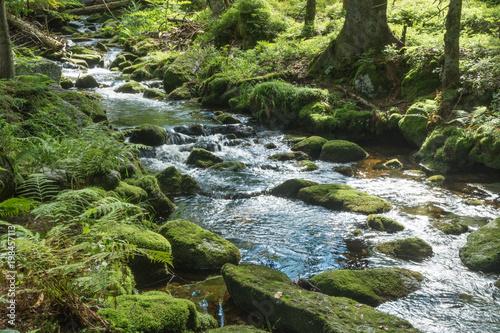 Poster Rivière de la forêt Wildbach Kleine Ohe im Bayerischen Wald