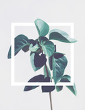 Single green tropical plant with white square frame aroung it isolated on light gray background. Copy space