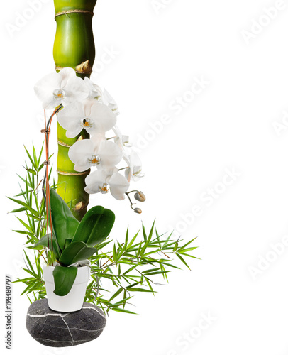 Foto op Canvas In het ijs bambou ventre de Bouddha et orchidée blanche
