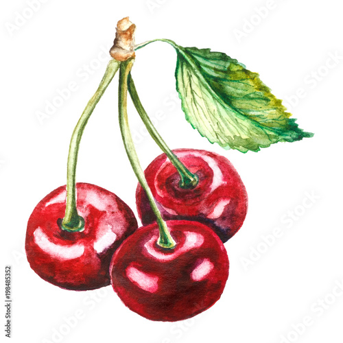 Hand drawn watercolor cherry on white background